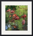 Flamingo Sleepover IMG_3320 by Jacque Alameddine