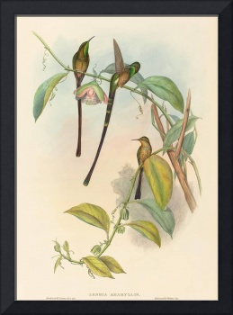 Henry Constantine Richter, John Gould~Lesbia Amary