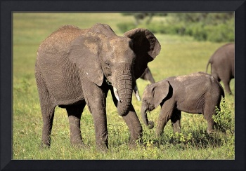 Elephant Mother on Lookout...