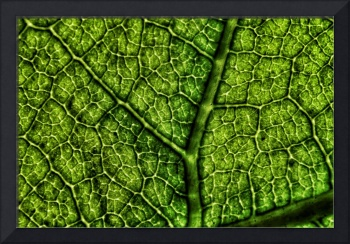 Green Avocado Leaf Macro, Edit E