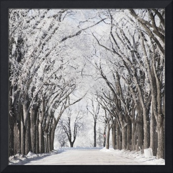 A Road And Trees Covered In Snow In Winter, Winnip