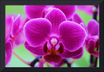 Vibrant violet orchids on green background