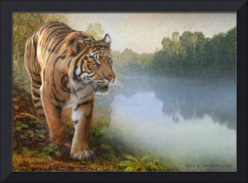 tiger along the river