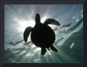 Sea Turtle Sunburst