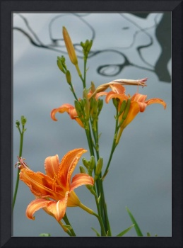 Orange Flower with Water Abstract