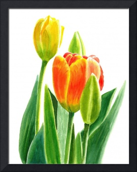 Orange Tulip with Buds