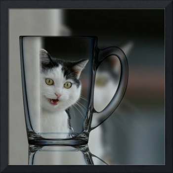 Cat in the Glass