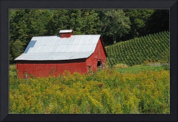 Red Barn, Yellow Field
