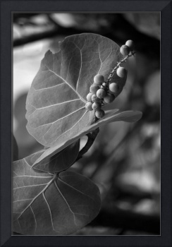 Leaves and Seeds B&W