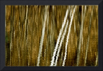 Reflections of Tall Trees Landscape Wall Art