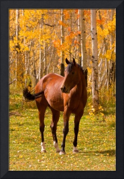 Horse in the Autumn Colors