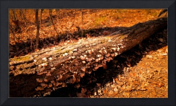 Dead Tree Log ~ Fungi,Mushrooms,Light,Forest Floor