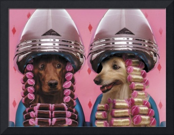 Dogs In Curlers
