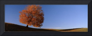 View of a lone tree on a hill in fall