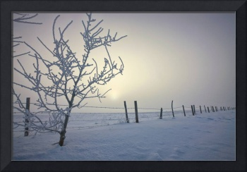 Hoar Frost Covering Trees And Barbed Wire Fence, C