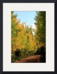 Arizona Autumn by Jacque Alameddine