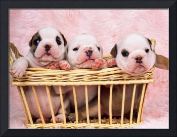 Puppies Stuck In A Wicker Basket