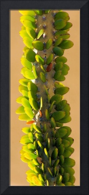 plaited green backlit cactus