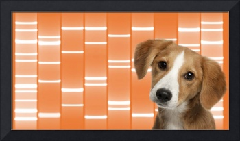 Pet Portraits DNA Art on Canvas - Tangerine