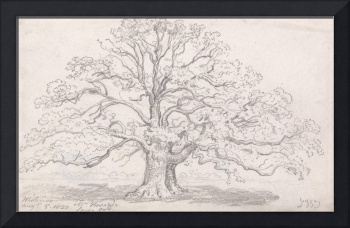 James Ward~Mr. Howard's Large Oak, August 5, 1820