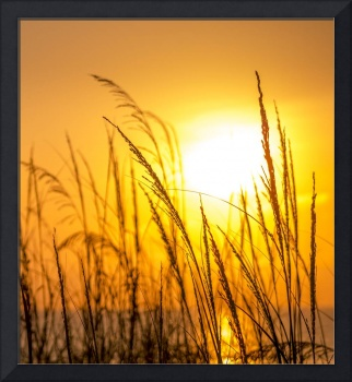 Sunrise and Sea Oats Jacksonville Beach Florida