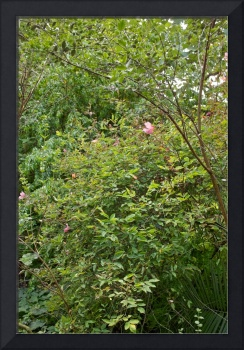 In the Physic Garden, Chelsea 28