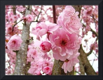 TREE BLOSSOMS Spring Pink Floral Nature Art