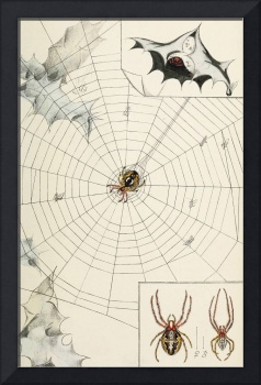 Vintage Garden Spider with Web Illustration (1891)