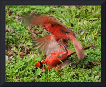 Fighting Cardinals