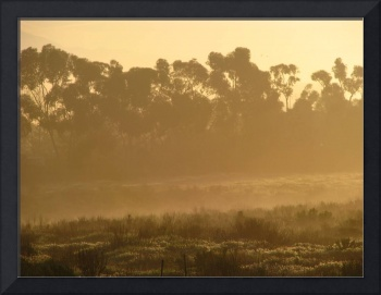 Golden foggy morning_4755