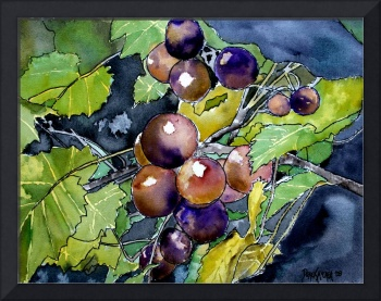 grape vine fruit still life