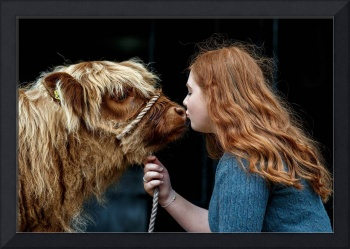Highland Calf Gets A Kiss