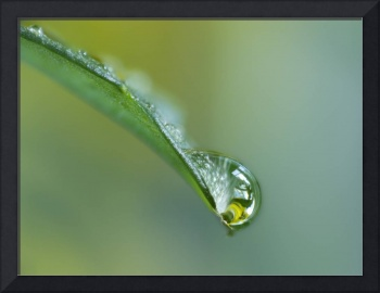 Close Up Of Water Drop On Leaf