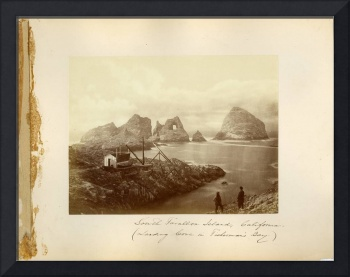 South Farallon Island by Muybridge