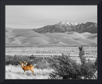 Great Colorado Sand Dunes Deer