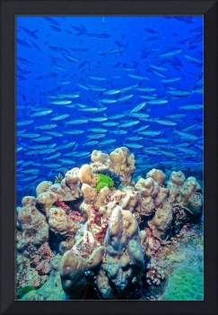 Millions Of Fish And Beautiful Corals