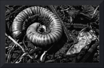 WORM-THING, EDIT C