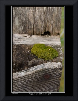 Moss on a Old Farm Gate