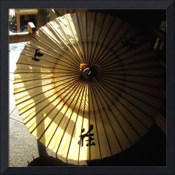 Winter sunlight on a fragile parasol