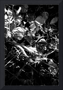 In Autumn's Shadow      0267 Black and White Edit