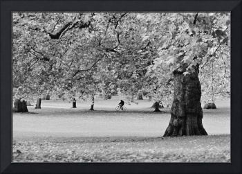 Green Park, Autumn 2, London