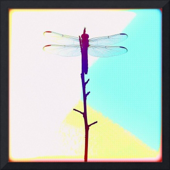 Painted Dragonfly I