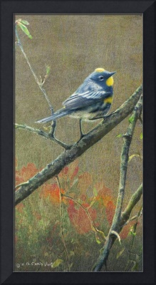 among the roses / yellow rumped warbler