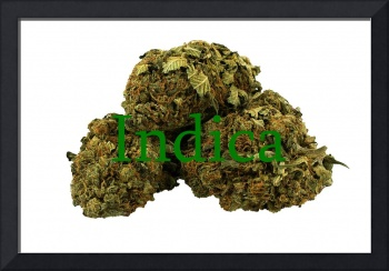 Indica Buds