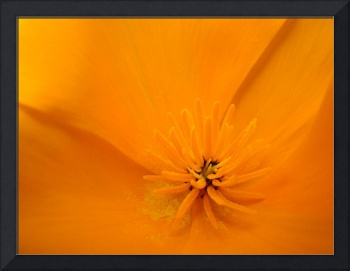 Macro Wildflower Poppy Flower 6 Floral Art Print