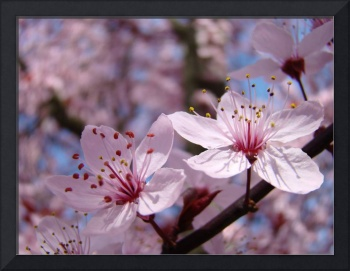FLORAL Art Prints PINK  BLOSSOMS Spring Flowers