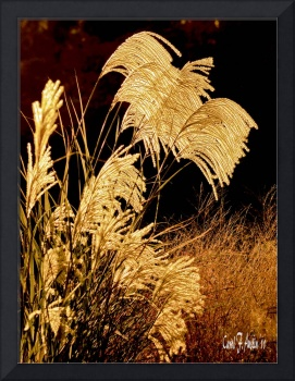 Golden Harvest Maiden Grass Wall Art