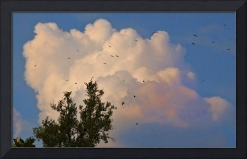 clouds birds