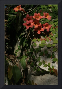Trumpet vine and Anole.