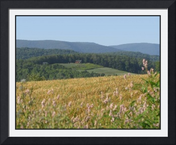 Wellsboro Pennsylvania Corn Field Landscape